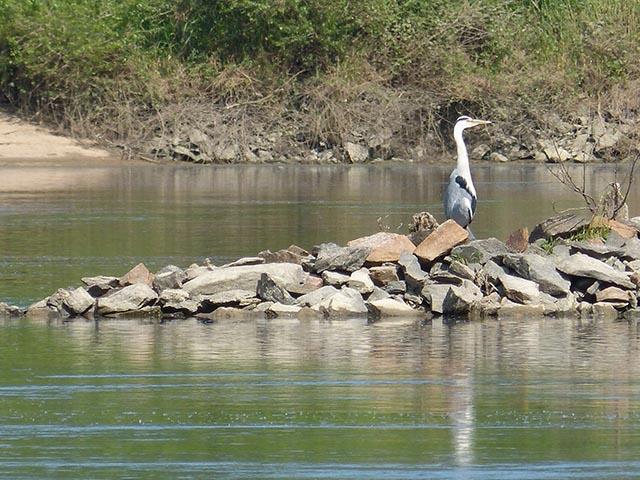 Croisière ornithologique en Loire